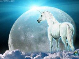 Whitehorse55